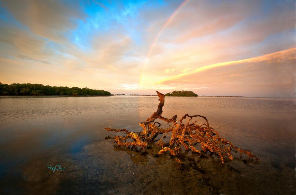Perico Mangrove-X3