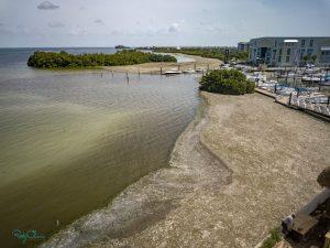 An algae bloom darkening the waters of the bay.