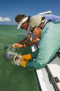 Two fishermen work to remove a hook from the mouth of a tarpon while leaving the tarpon in the water next to the boat.