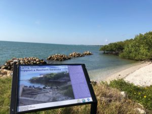 Image of Living Shorelines